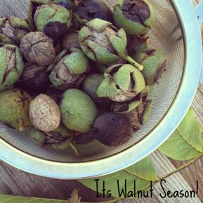walnut-season